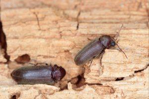 הדברה s-hadbara מבצעי עבודת ההדברה אשר יודעים לתת שירות טוב עם נכונות לתת שירות מקצועי שיודעים להדביר מזיקים בביוב תוך כדי איתור עכבישים וחרקים מעופפים