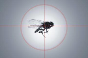 הדברת זבובים בבית ובחצר