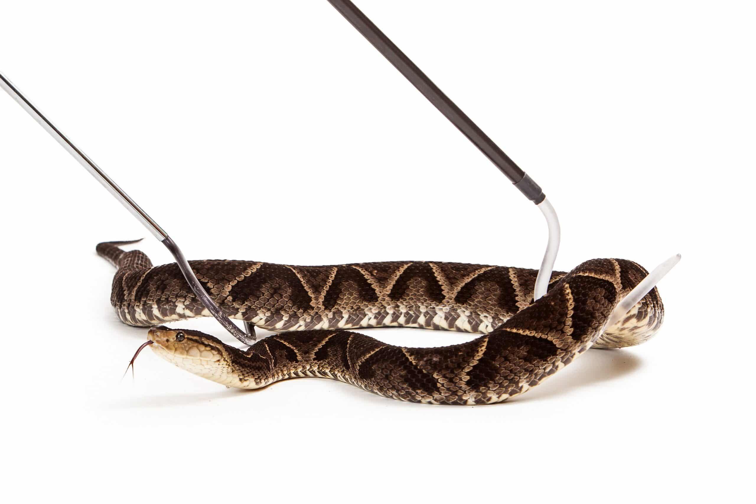 הדברה s-hadbara מדבירים מוכרים חכמים מבוגרי המוסמכים בתחום ההדברה שיודעים להדביר מזיקים בביוב תוך כדי איתור עכבישים וחרקים מעופפים