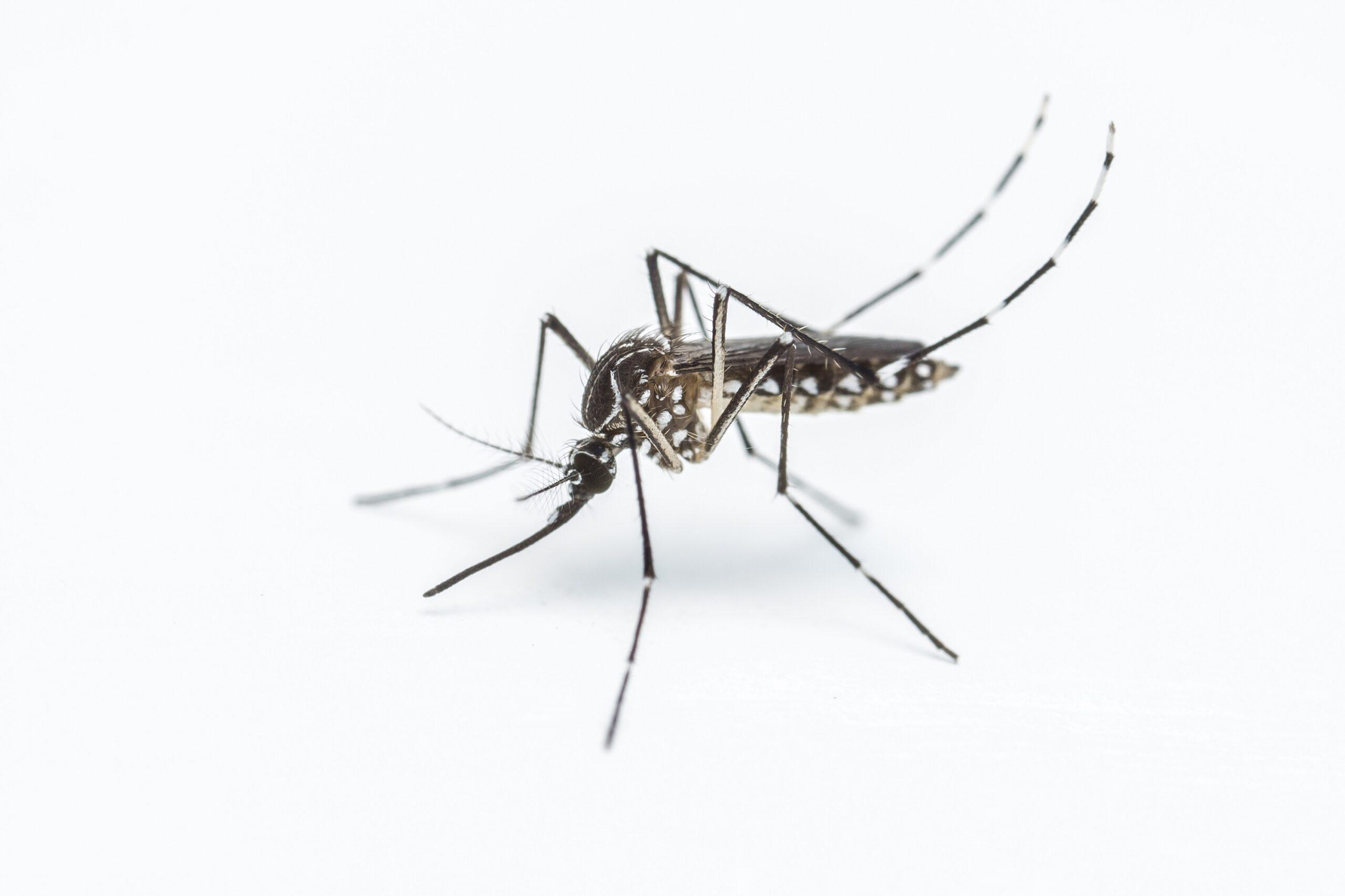הדברה s-hadbara נותני השירות בעלי שנות ניסיון עם מקצועיות ומיומנות ועם הרבה מוטיבציה שיודעים לאתר איפה יתושים דוגרים תוך כדי איתור מקור הנגע