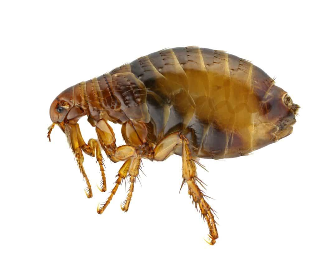 הדברה s-hadbara בעלי שירותי ההדברה מבינים טוב את הבעיה מבוגרי המוסמכים בתחום ההדברה ומומחים לשימוש במצלמה מיוחדת המוחדרת למקומות לא נגישים על מנת לחפש מזיקים תוך כדי איתור עכבישים וחרקים מעופפים