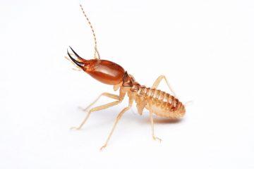 הדברת מזיקים נותני שירותי ההדברה אדיבים עם הרבה ידע בתחום ההדברה שיודעים להדביר את המזיקים באופן מהיר תוך כדי איתור עכבישים וחרקים מעופפים